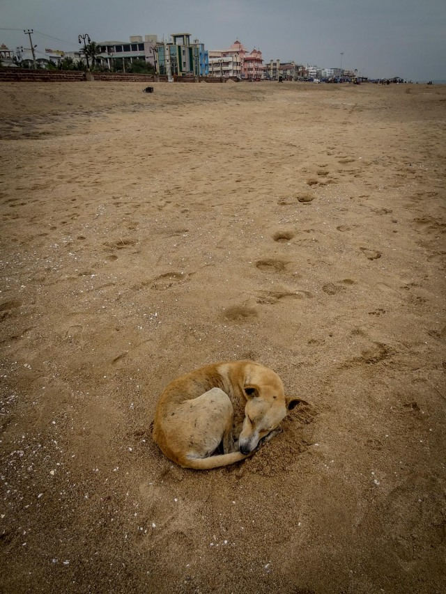 Beach Dog - Puri