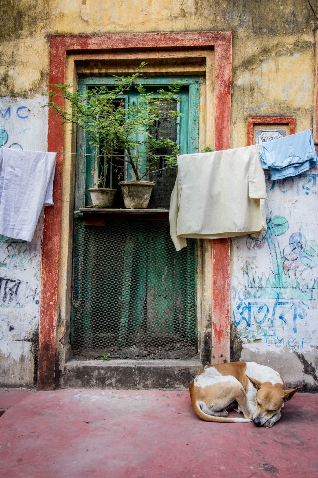 Dog with Door - Calcutta